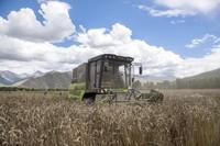 拉萨市达孜区克日村的农民用农业机械收割青稞(9月6日摄)。