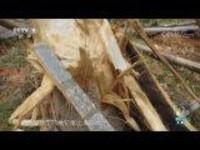 《同象行》 第七集 雨林自修课