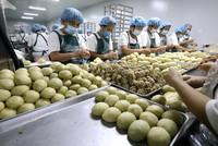 9月12日,在河北省石家庄市藁城区九门回族乡黄庄村一家月饼生产企业,工人在制作手工月饼。