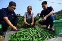 中国为何能做到减贫贡献全球第一? 时政