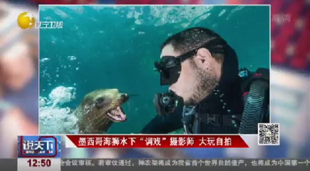 """墨西哥海狮水下""""调戏""""摄影师大玩自拍"""
