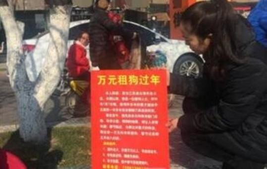 女子闹市街头举牌求助:1万元租狗过年