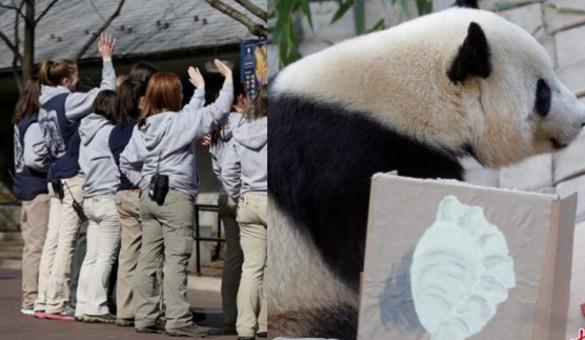 旅美大熊猫启程回国 饲养员依依惜别