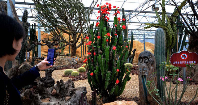 沙漠绿洲、水涧花苑 广丰有个热带植物园