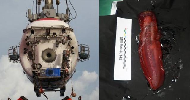 蛟龙号下潜4811米 抓到红色大海参