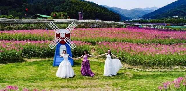 高清图:五彩斑斓的世界 南昌梅岭夏花绽放