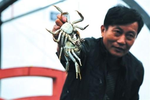 23日阳澄湖大闸蟹开捕 预计总产量1200吨