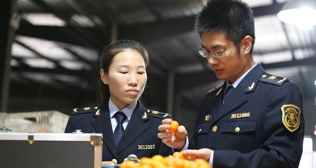 江西南丰:小小蜜桔远销海外