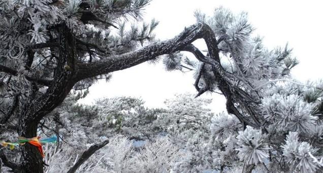 江西庐山现绝美雾凇景观