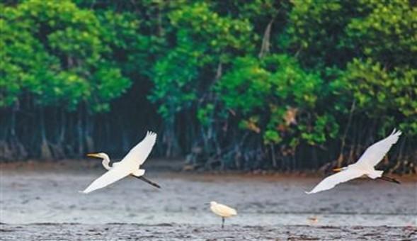 海南立法推动生态省建设 环境质量保持全国领先