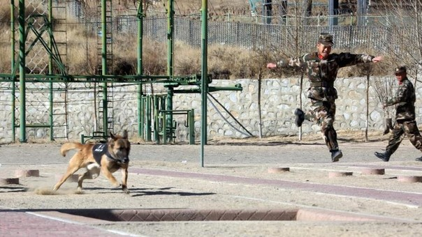 """西藏武警军事体育竞赛锻炼""""精兵悍将"""""""