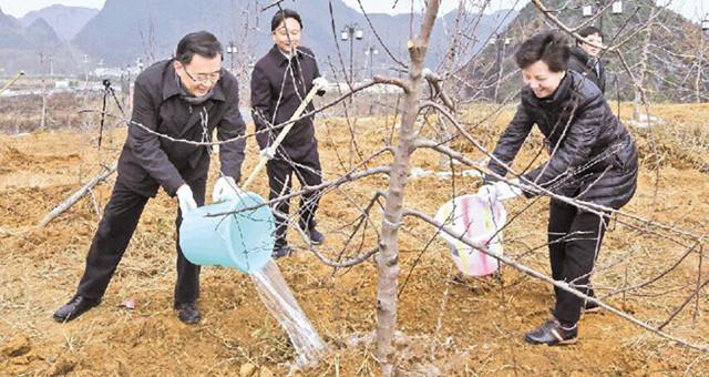 孙志刚书记、谌贻琴省长参加义务植树活动
