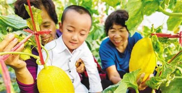 海南173种西瓜甜瓜新品种亮相