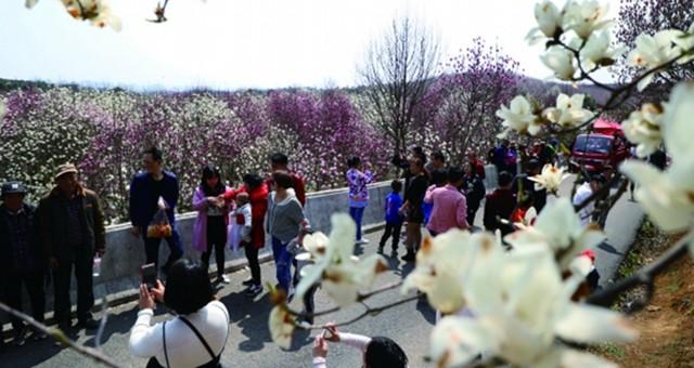 红枫湖畔 踏青赏花