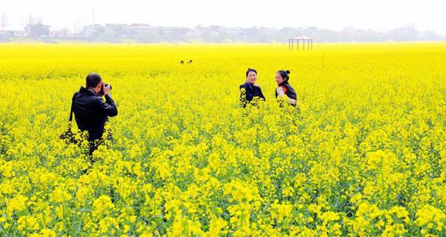 江西:长江风景小岛激情绽放春意