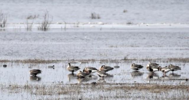 候鸟翱翔北京野鸭湖