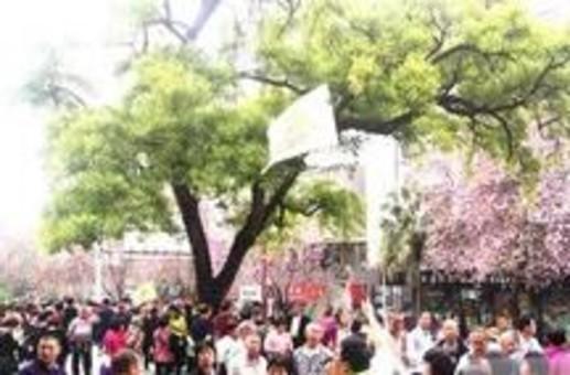 2千名广东游客来柳赏紫荆