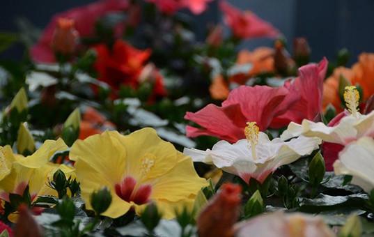 2019世园会北京展品亮相世界花卉大观园