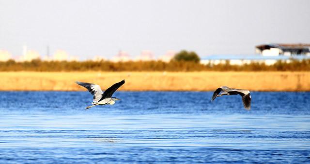 """走进""""华北明珠""""团泊鸟类自然保护区"""