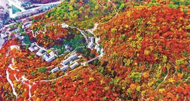 坡峰岭的红叶 进入最佳观赏期