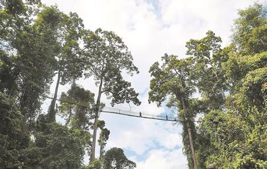 国家公园:生态守护的云南实践