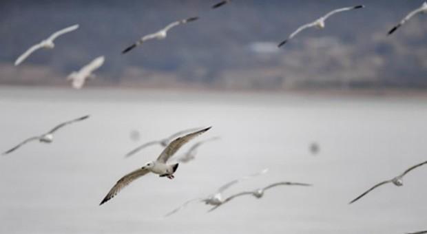 吉林珲春:候鸟迁徙停歇站