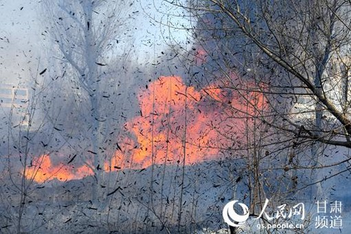 甘肃张掖:芦苇火灾致3栋民房起火