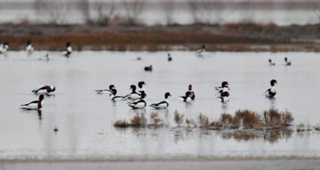 哈巴湖自然保护区成珍稀鸟类乐园