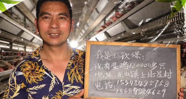 海口东山镇逾10万只蛋鸡急待售卖 每只20元