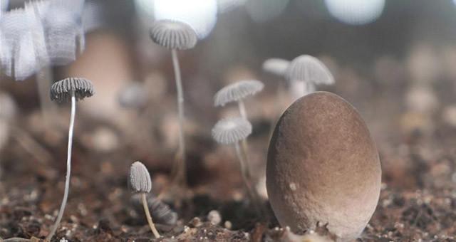 山东莘县:小蘑菇打造大产业