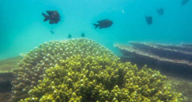 """探访海南陵水""""海洋牧场""""珊瑚保育区"""