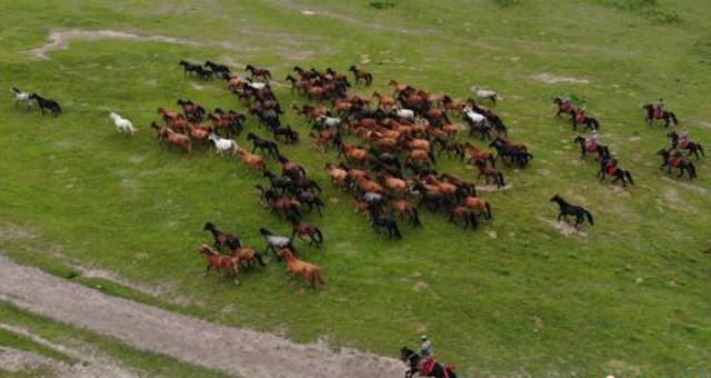 世界第一大马场山丹马场马匹成群