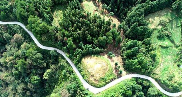 """贵州:漫山遍种""""致富苗"""" 林下产业助增收"""