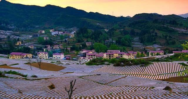 桐梓县全力推进500亩坝区产业结构调整