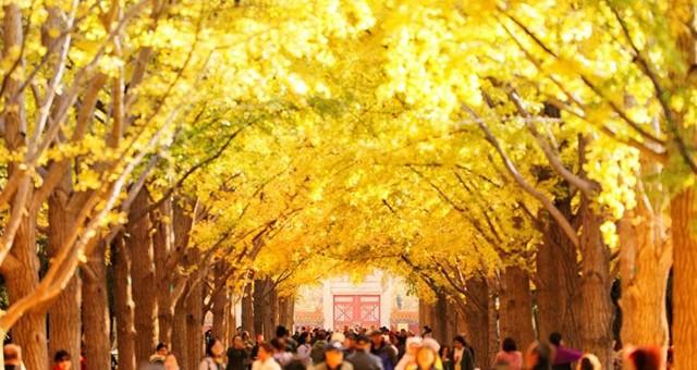 地坛彩叶渲染京城秋色