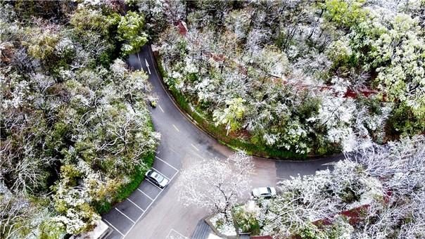 一场春雪后 南京钟山景区美到令人沉醉