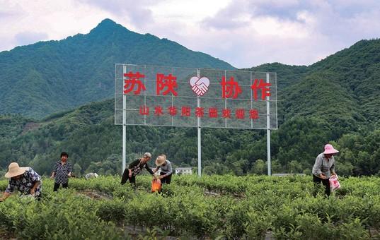 南通如皋与陕西洋县加深扶贫协作