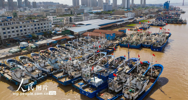 """浙江瑞安:受台风""""黑格比""""影响 渔船回港避风"""