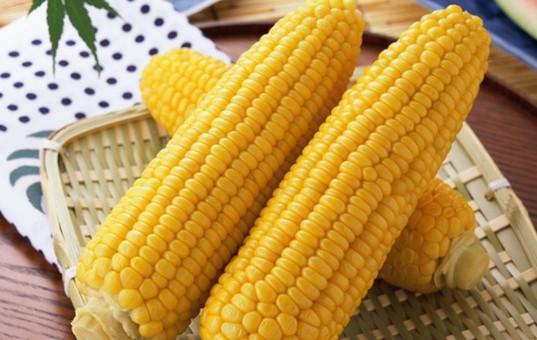 常吃玉米对血糖好