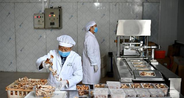 江西赣州:茶树菇产业助农增收