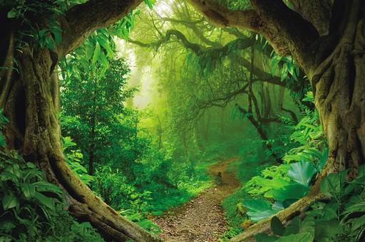 琼岛雨林生万物