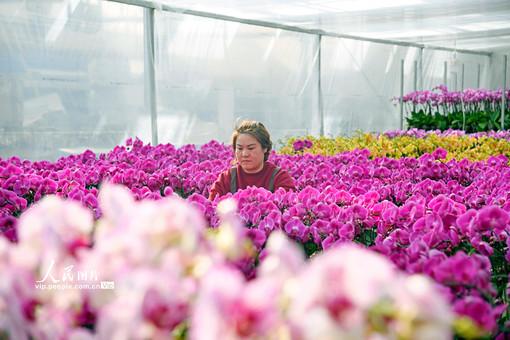 花卉市场年味渐浓