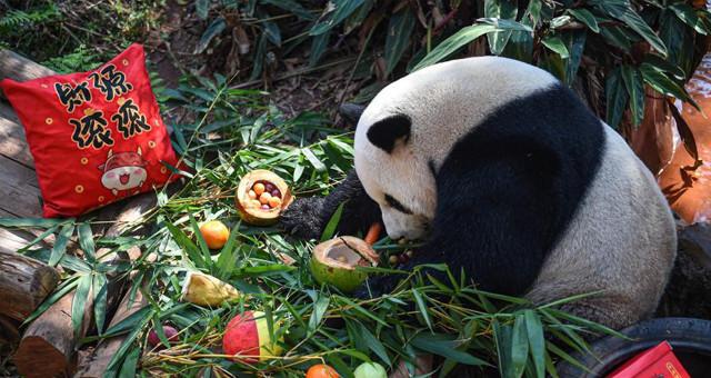 海口:动物享美食迎元宵节