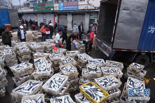 广西北海:新春鱼市旺