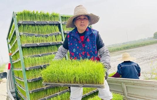 无锡组织春耕生产 农技人员播种早稻