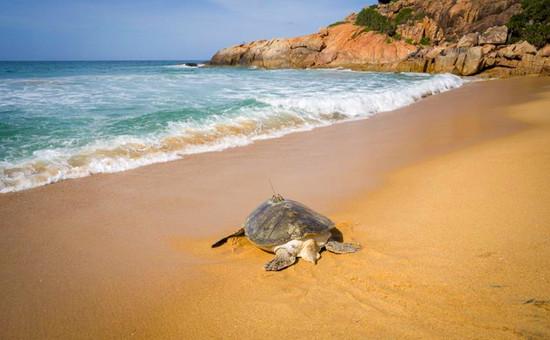 海南:放归海龟 守护海洋