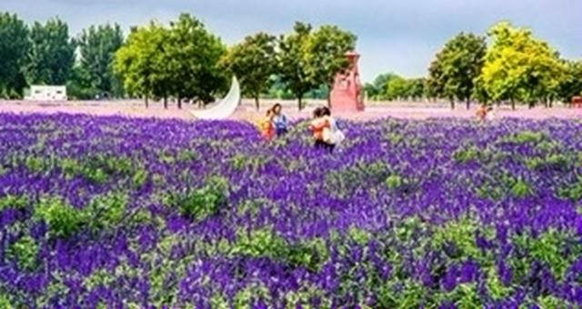 北京紫谷伊甸园:200亩秋花把秋天变的绚烂多姿