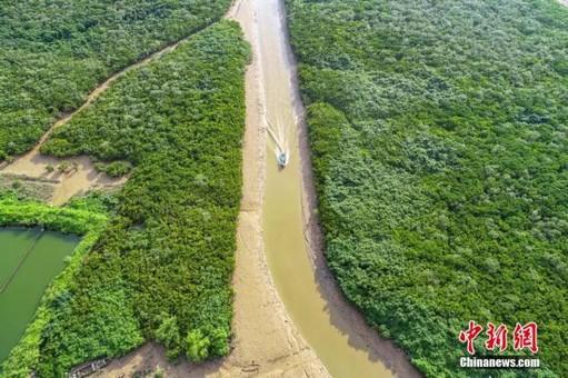 航拍镜头下的广东湿地 绿意盎然美如画