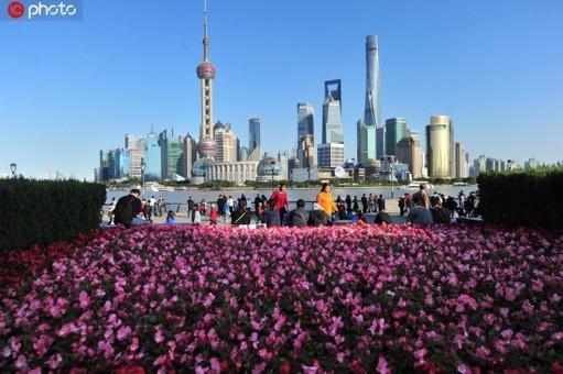 上海街头花团锦簇迎进博会