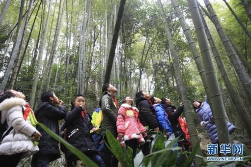 """重庆北碚:""""森林课堂""""约会大自然"""